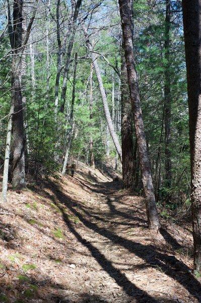The trail as it follow Turkeypen Ridge.