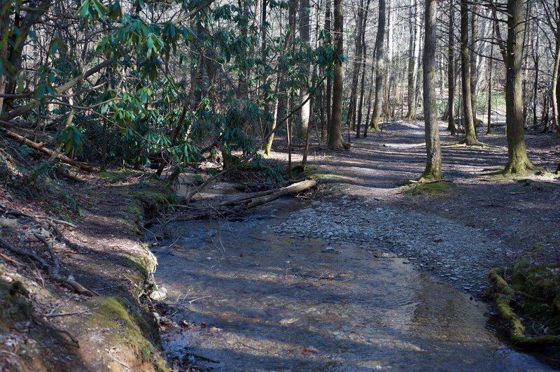 The trail crosses a branch of Laurel Creek via a log or rock hop.