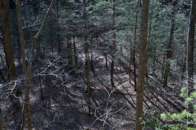 Looking down from the trail into the bottomland. This may have been cleared farmland at one point.