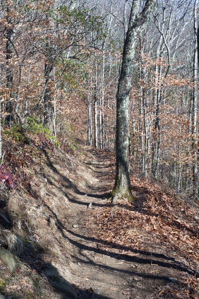 The trail narrows as the AT climbs from Russell Field to Spence Field.