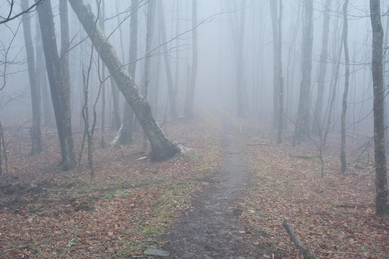 Trail in the clouds. While parts of the trail can be clear, others can be shrouded by fog, part of the reason the area is known as the Smokies.