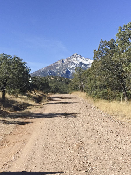 The view of Mt. Wrightson is perhaps the only good thing about the long slog up this road.