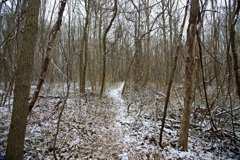 Light snow on the trail at the Zona Wildlife Sanctuary.
