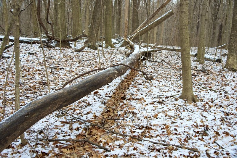 A snow shadow from a fallen log.