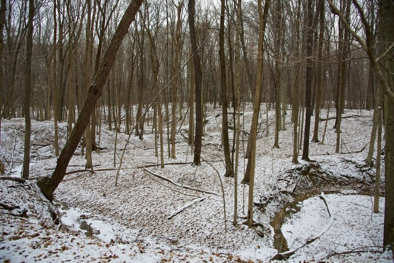 Wooded ravine in the wintertime.