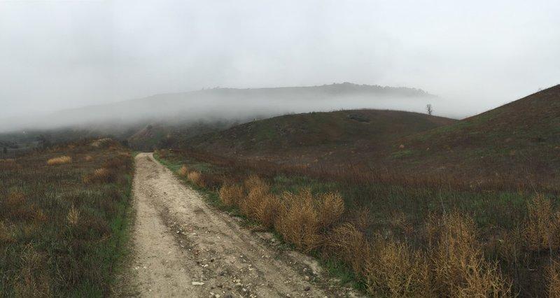 Early morning fog on East Las Virgenes.