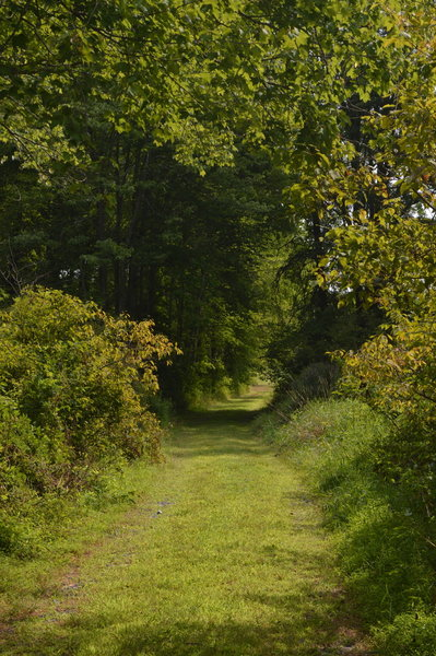 The trail from the woods to the meadow at Crow's Nest Preserve.