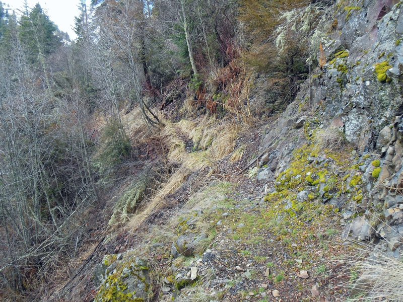 The narrow part of Asotin Creek Trail about 8 miles from trailhead.