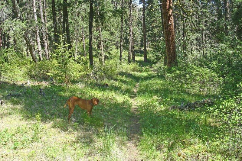 North Pinkham Trail and the runner dog Coffey.