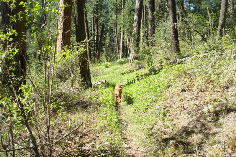 Asotin Creek Trail turns to great singletrack about two miles from the trailhead.