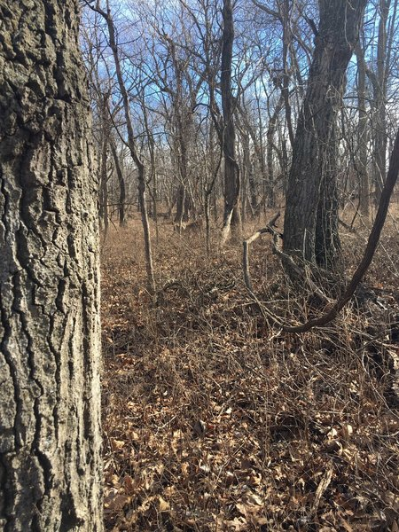 If you look hard, you can see a deer back in the woods.