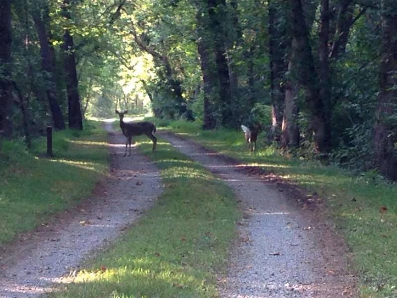 Deer sightings are routine near Mile Marker 117.
