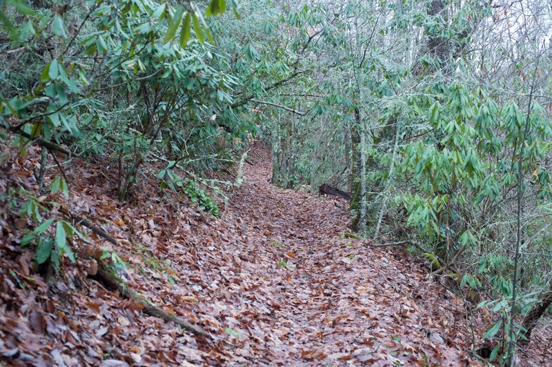The Sluice Gap Trail as it descends along the ridge.  Covered with leaves in the fall or winter, rocks and roots can be hidden and trip you up if you aren't watching where you go.