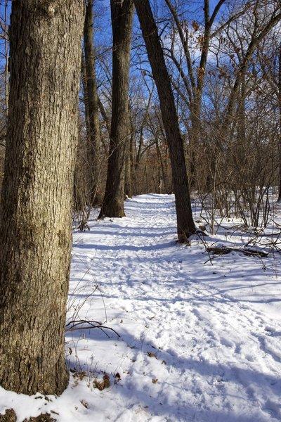 Calumet Dunes trail in the winter.