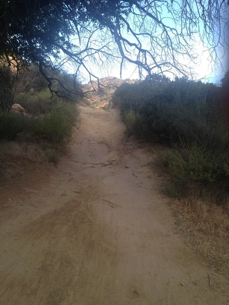 Singletrack on Cheeseboro Canyon Trail.