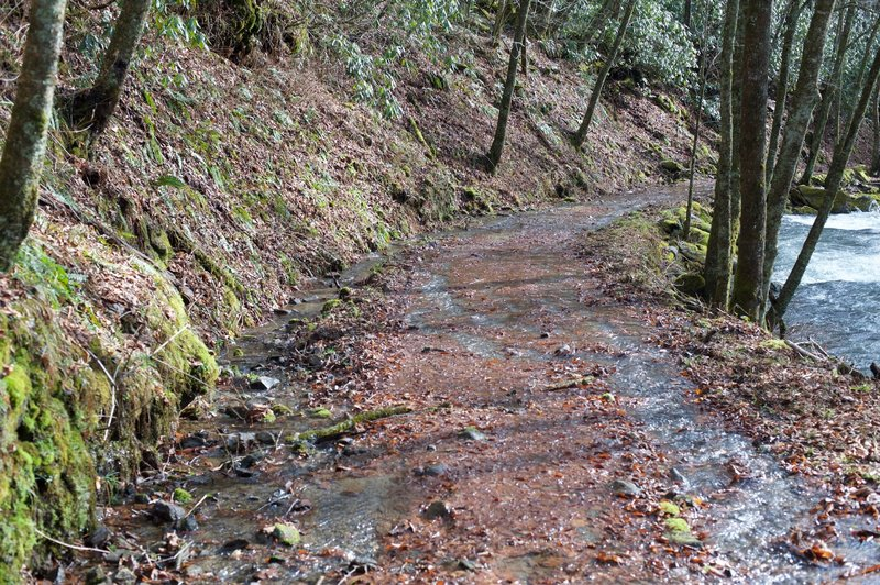 The trail can be wet if it's been raining recently. Make sure you wear appropriate footwear. The trail is wide from this point all the way to Smokemont.