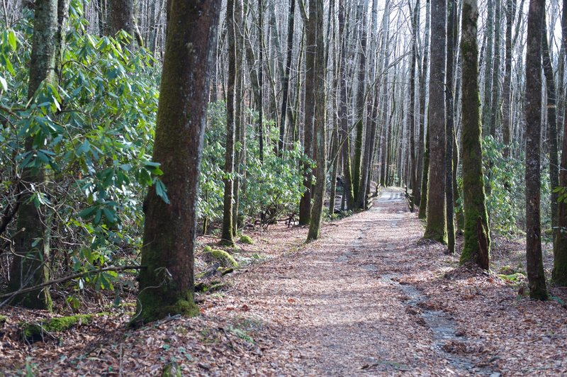 A pleasant walk in the woods. Rhododendron can be seen off to the sides, but it's not like the tunnels found in other parts of the park.