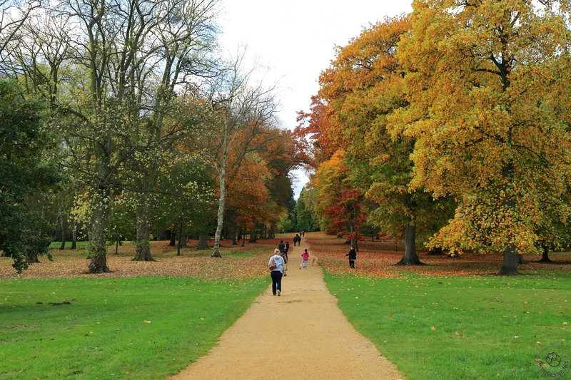 Windsor Great Park - Colorful road.