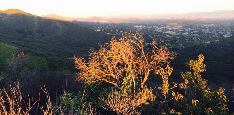 On Los Robles Trail East looking down into Thousand Oaks.