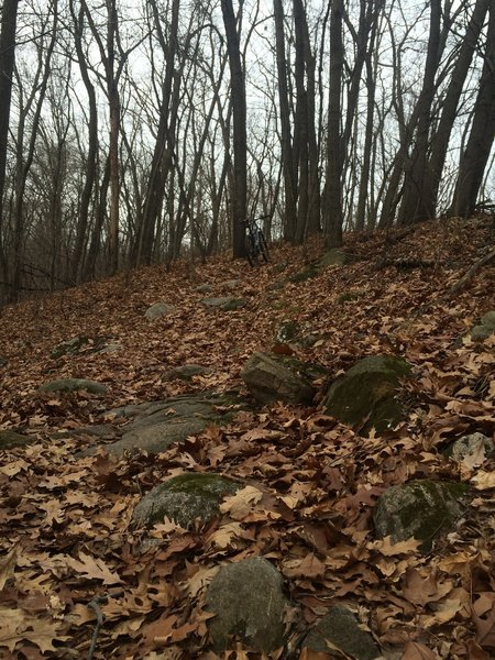 Rocks and leaves on the D Loop.