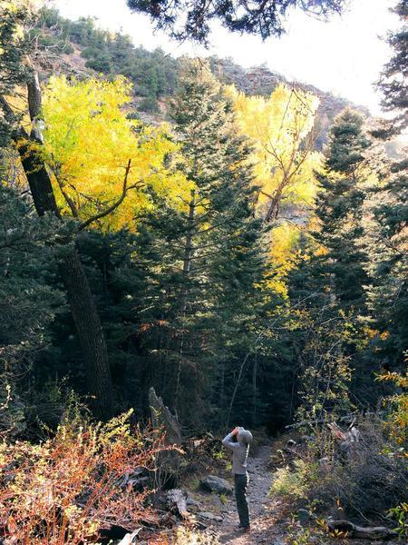 Birder, Mosca Pass Trail