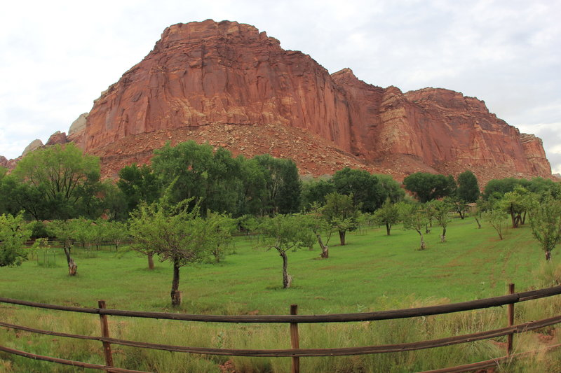 Orchards and Mountain