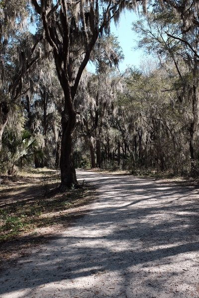 At the start of the Live Oak Trail. Behind me and to the left are some picnic tables, located under shade.