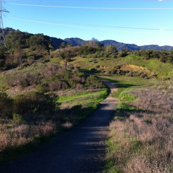 Looking towards the Stevens Creek Boundary tucked in the trees near the electrical tower.