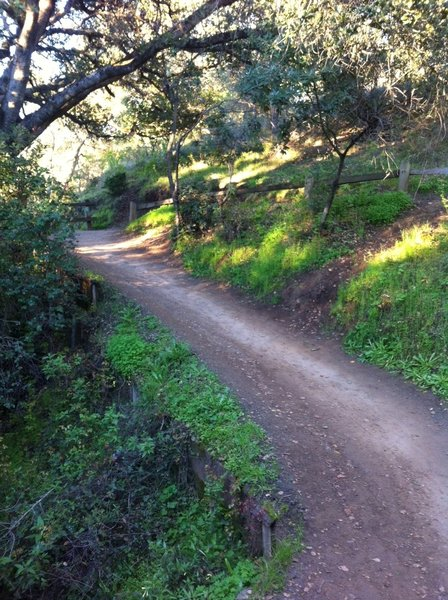 On the Cora Older Trail.