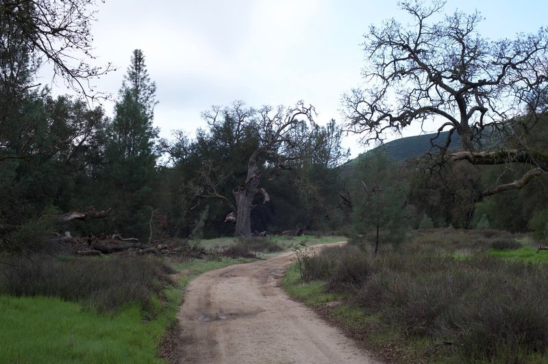 The South Wilderness Trail starts by following the old fire road, so it's nice and wide to start.