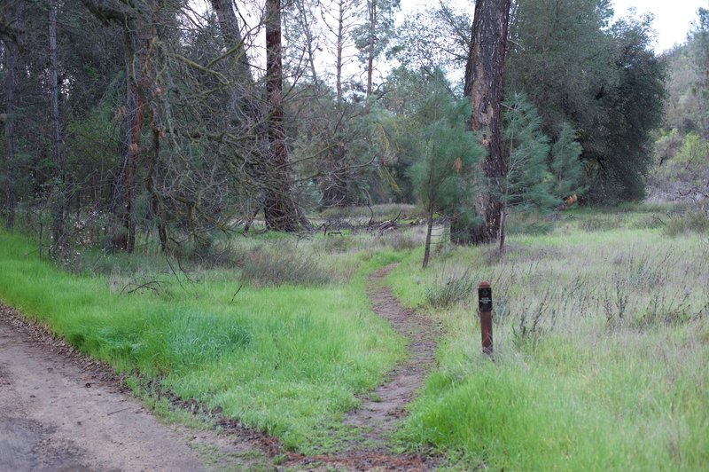 The South Wilderness Trail breaks away from the road, and narrows as you can see here.
