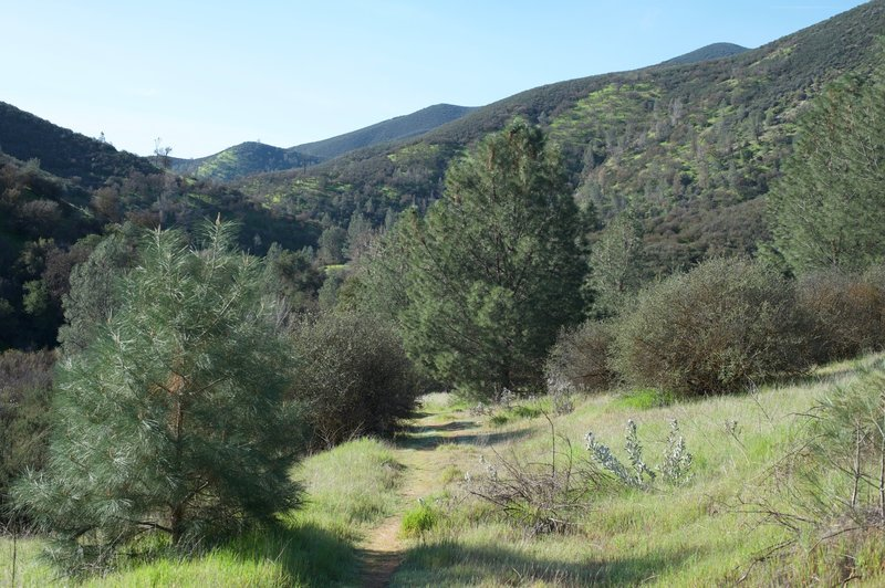 The trail runs close to the creek bed, causing trees to be plentiful in the area. This provides shade during the heat of the day while the higher trails in Pinnacles lack the shade.
