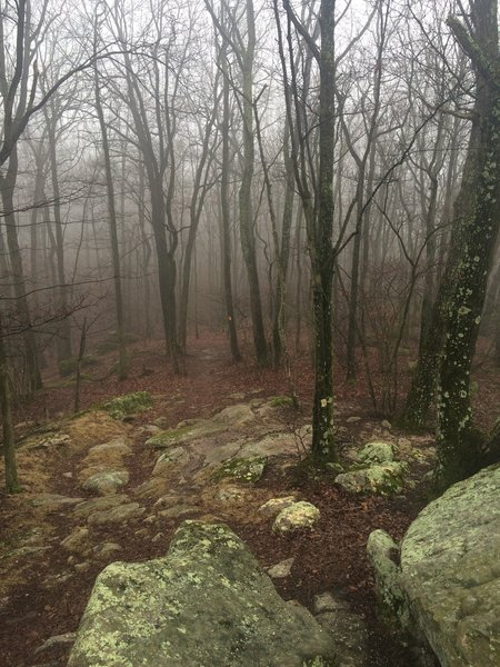 Foggy day on the trail.
