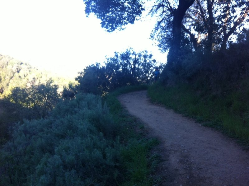 On the Coyote Trail.