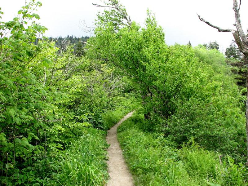 Bunion Trail, Great Smokey National Park.
