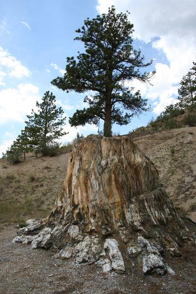Big Stump.