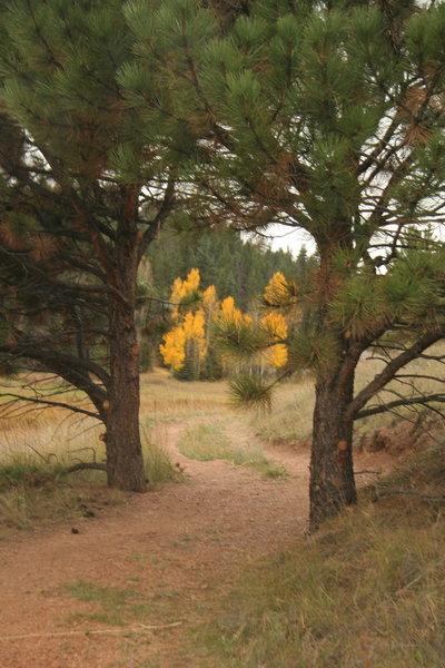 Beautiful scenery along Sawmill-Boulder Trail.