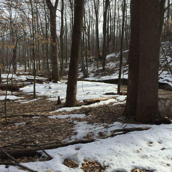 Stream between Osprey Heights Loop (not shown) and Lakeview Loop.