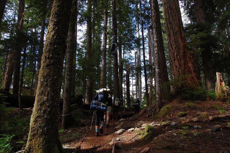 Approaching Elk Lake through the dense trees.