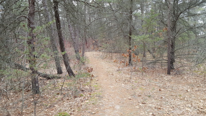 Wooded area of the Dunes Nature Trail.