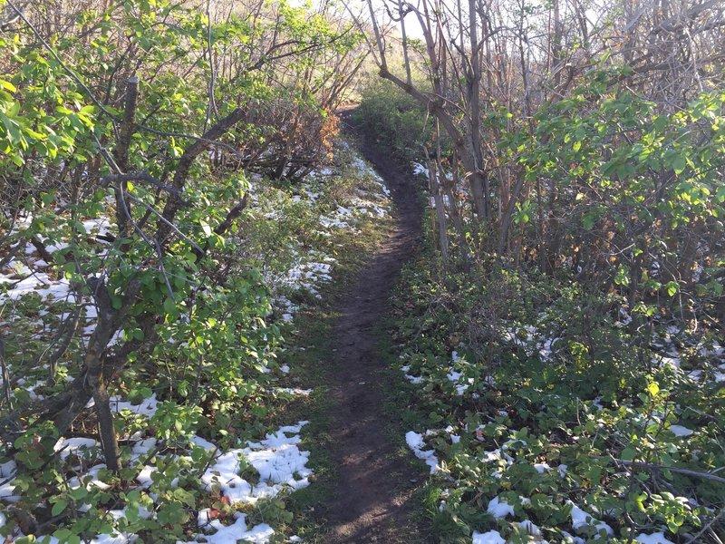 Early spring trail run!
