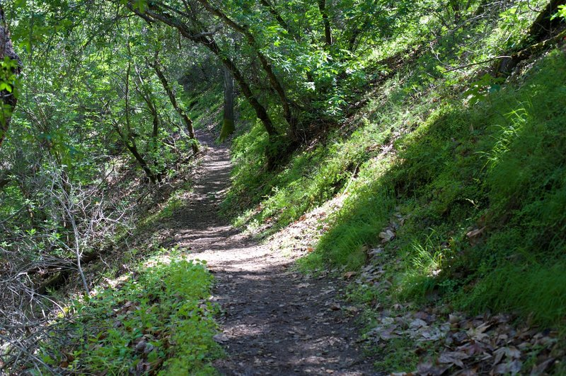 The trail descends from the Bear Gulch area to the South Chalone Creek and Bench Trail.  Its one of the better shaded trails in the park.