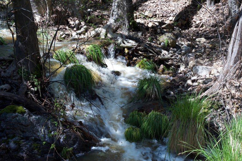 Longer grasses can be found around the creeks in the winter and spring when there is more water flowing through the area.