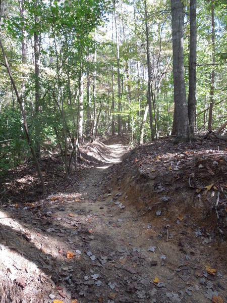 An example of the rolling singletrack on the Piedmont Trail.