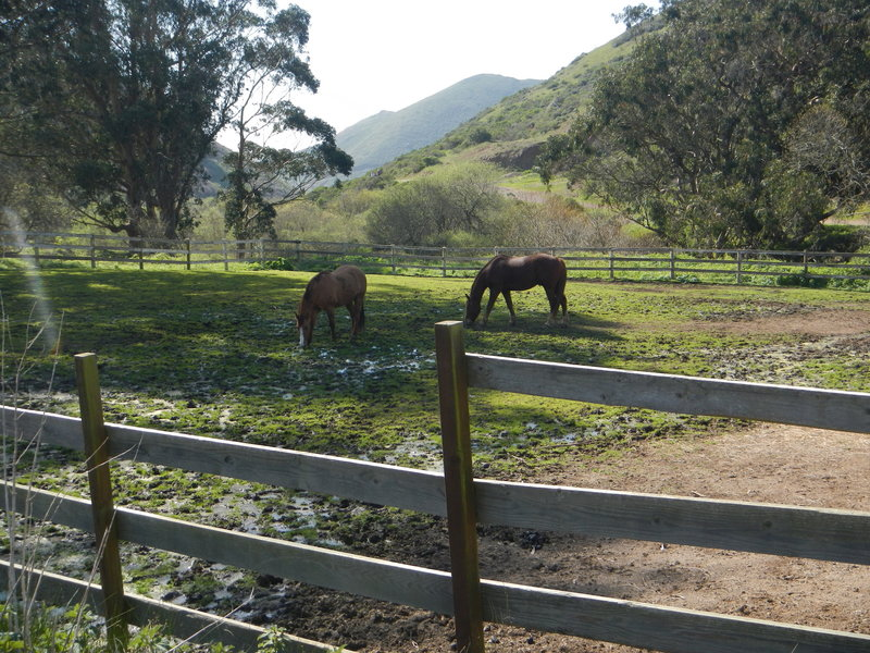 Horses after a day's work on the Tennessee Valley Trail, refueling.