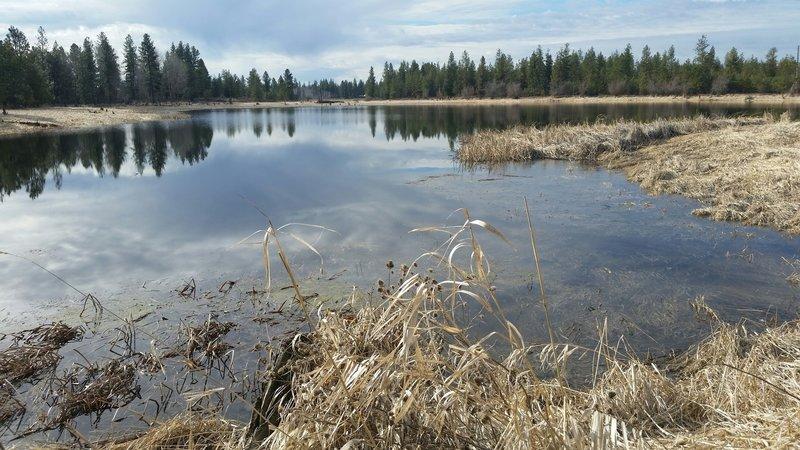 Slavin Ranch wetlands.