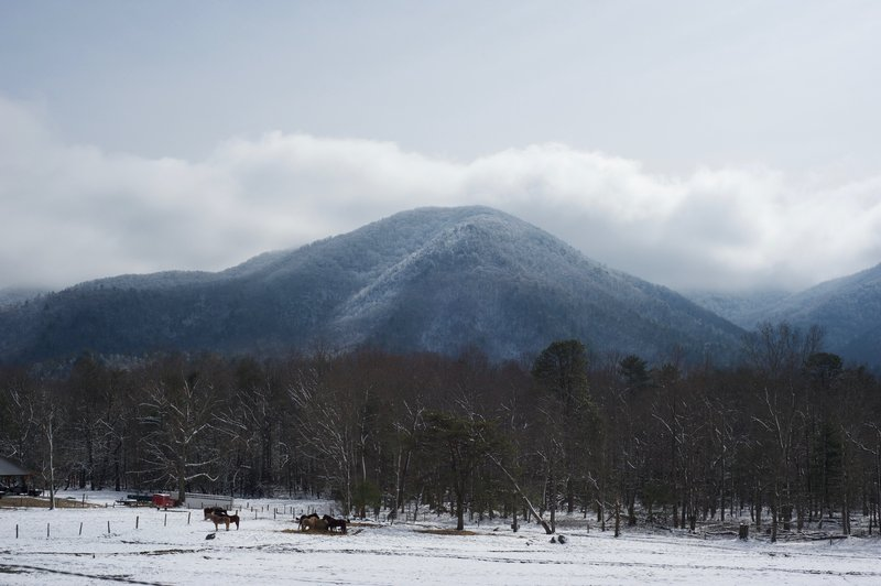 Looking up at the crest of the Smokies from Cades Cove.  Horses feed in the fields.