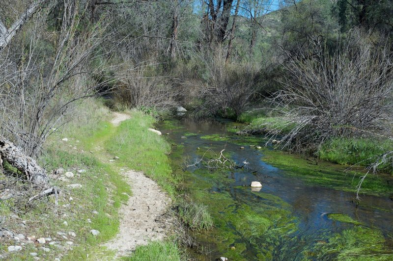 The trail skirts the creek for several miles.  The North Wilderness Trail criss crosses the creek multiple times via rock hops, so be ready to jump rocks.