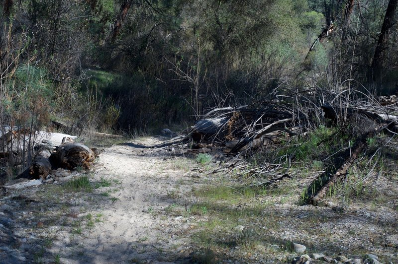 The North Wilderness Trail can be sandy in areas as it moves through the old riverbed.