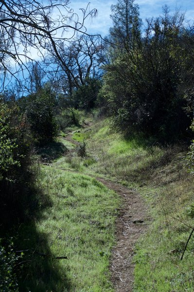 The North Wilderness Trail remains narrow as it climbs the hill.